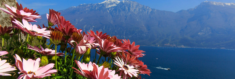 Wählen Sie Ihr Frühlingsangebot am Gardasee